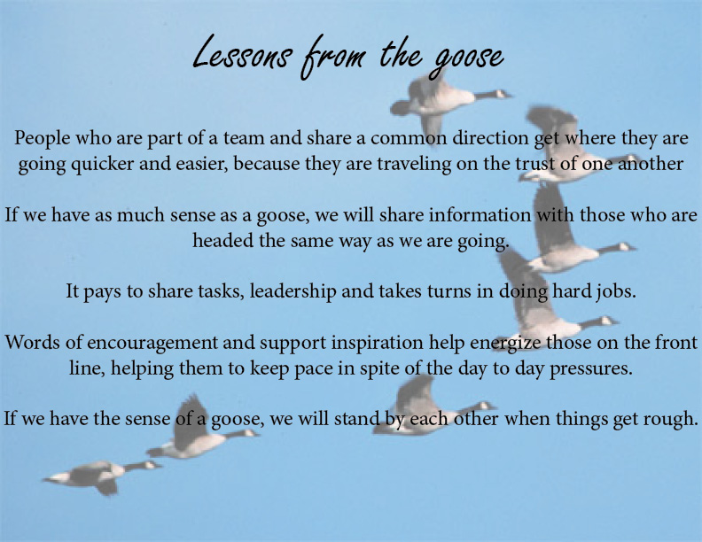 Lesson from the goose